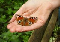 Vlinder in hand